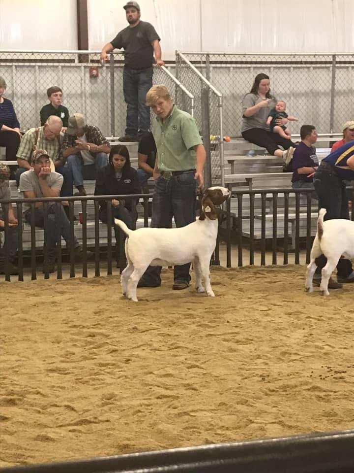 4H member Carson Wheeler at the Oklahoma County Livestock Show